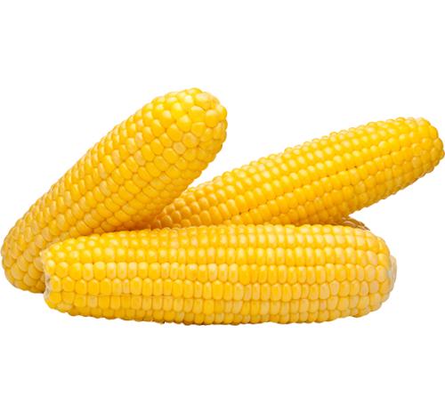 Кукурудза солодка фермерська, початок