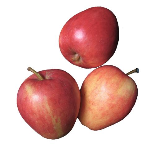Яблуко Рекарда органічне, кг